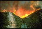 Wildfire - Credit Bureau Of Land Management