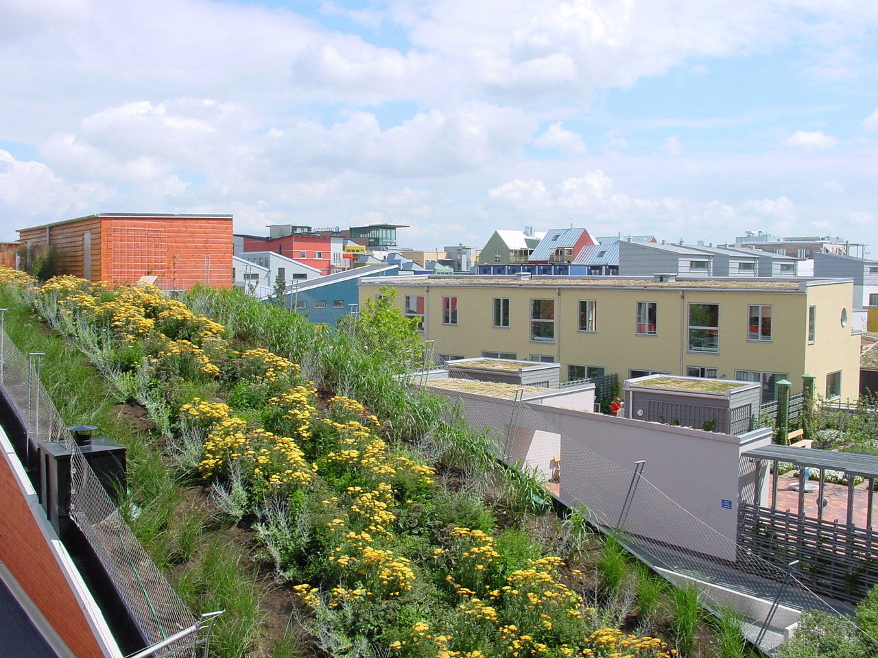 Green roof of the Bo01 District of Malmo, Sweden