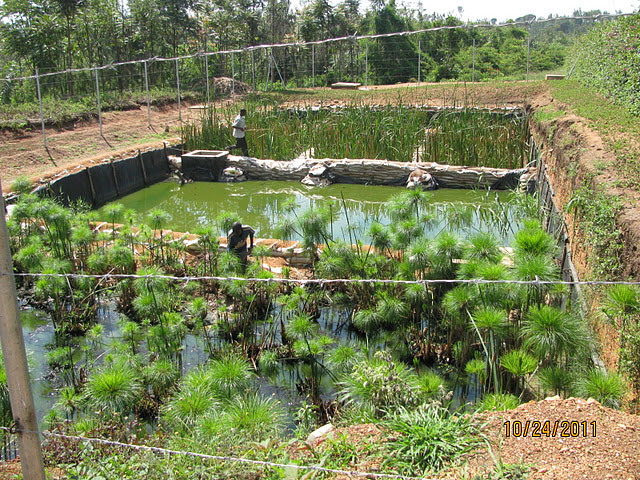 self-sustaining farming at Gashora Girls Academy in Rwanda
