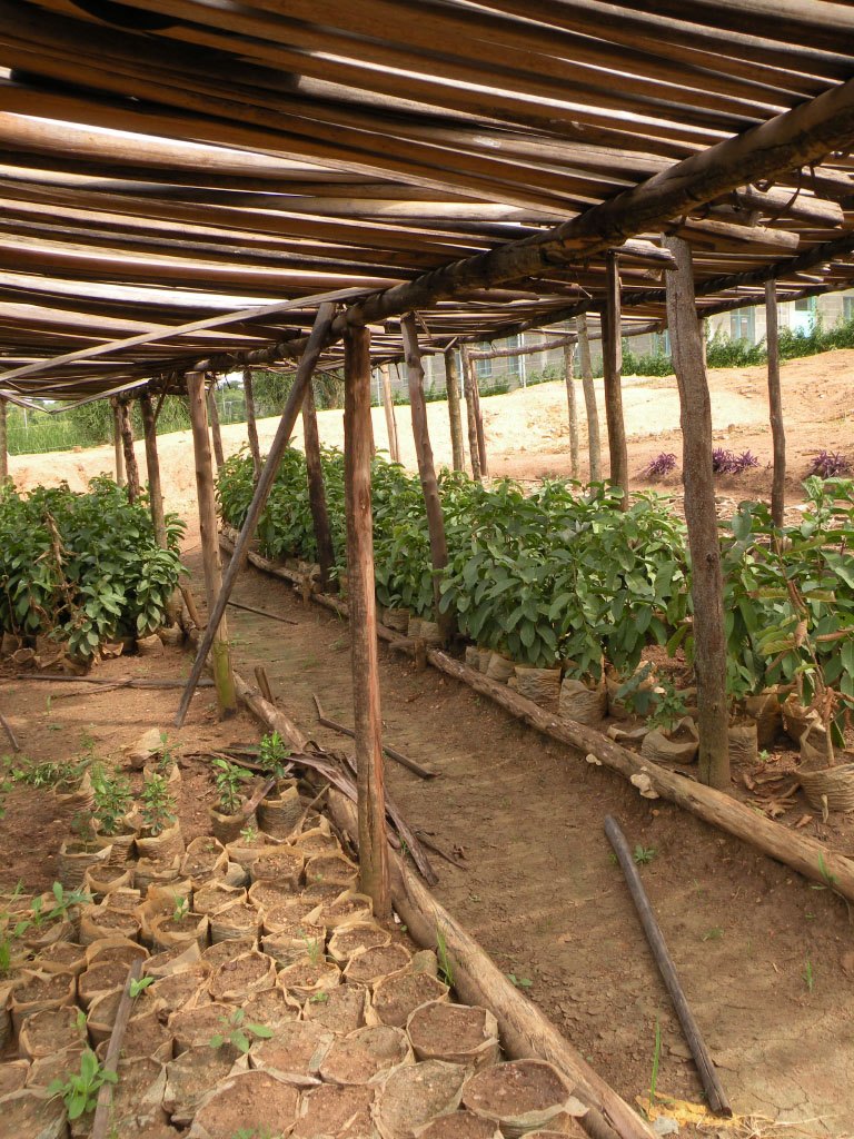 self-sustaining farming at the Gashora Girls Academy in Rwanda