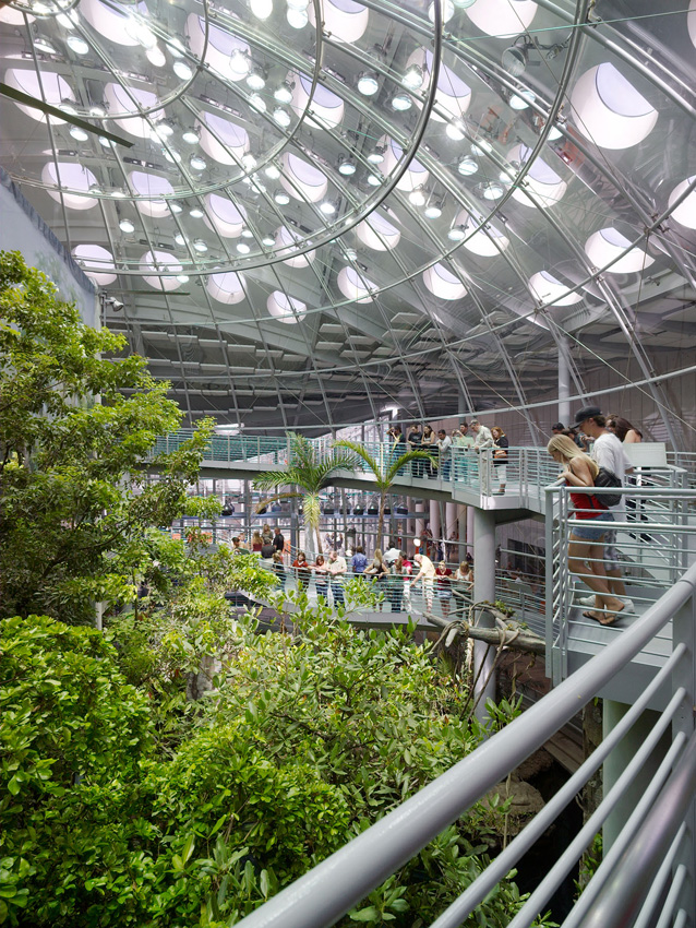 The rainforest exhibit inside of  Renzo Piano's California Academy of Sciences in San Francisco