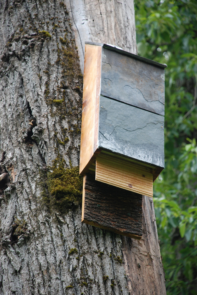 Bat House on Tree