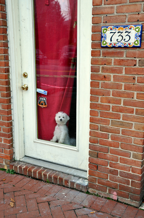 I wish I had a Doggie Door