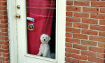 I Wish I Had A Doggie Door | Image (CC BY-NC-ND 2.0) Kevin Harbor