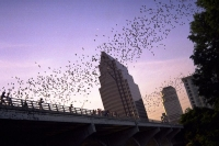 Natural Pest Control: Benefits of Bat Houses