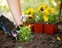 Planting 101: Understanding the Basics of Growing a Garden