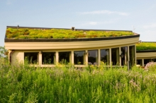 Green Roofing Options