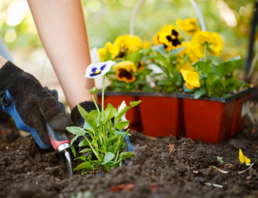 Planting 101 understanding the basics of growing a garden for Planting a garden