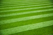 Establishing Turfgrass: Seed vs. Sod